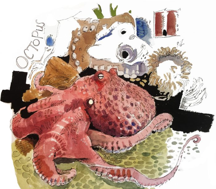 Illustration of octopus at the Georgia Aquarium