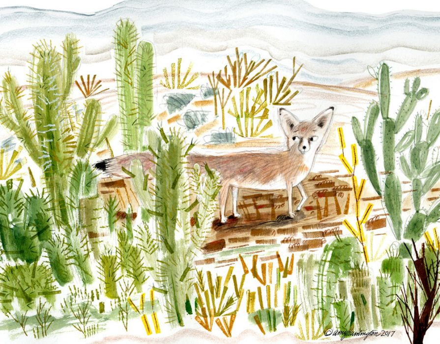 Kit fox in the desert, illustration