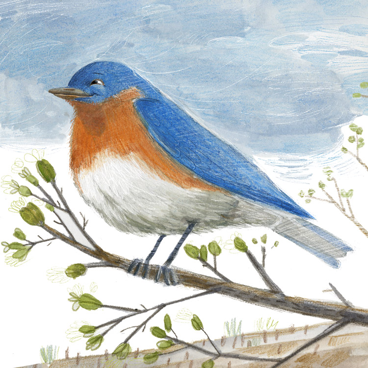 illustration of smiling bluebird