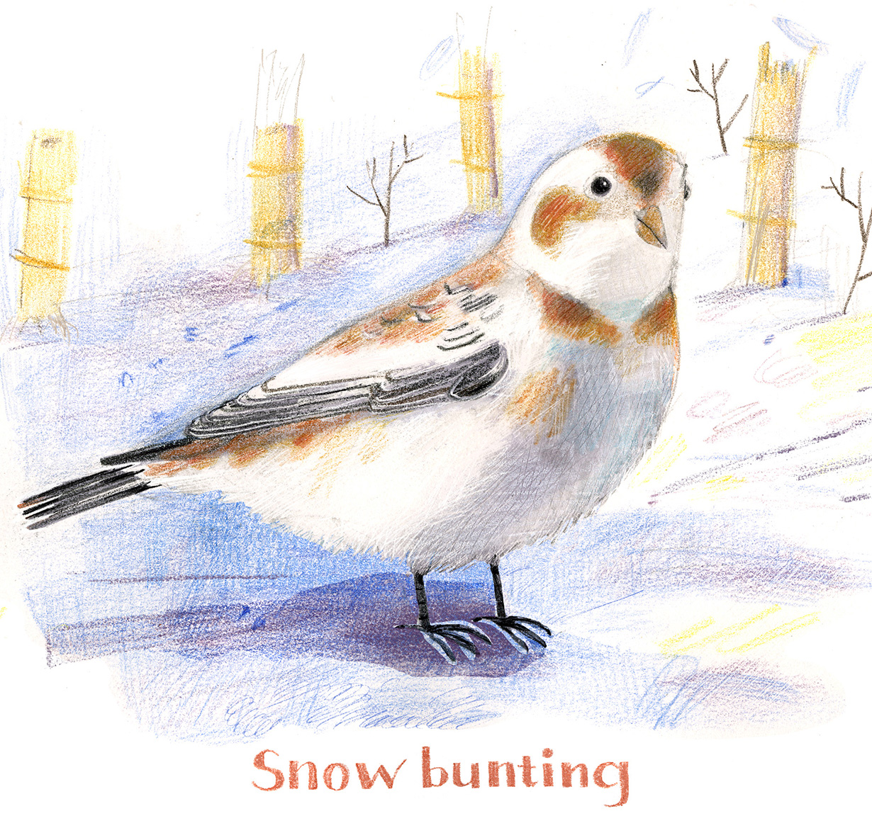 Illustration, Snow bunting on ground