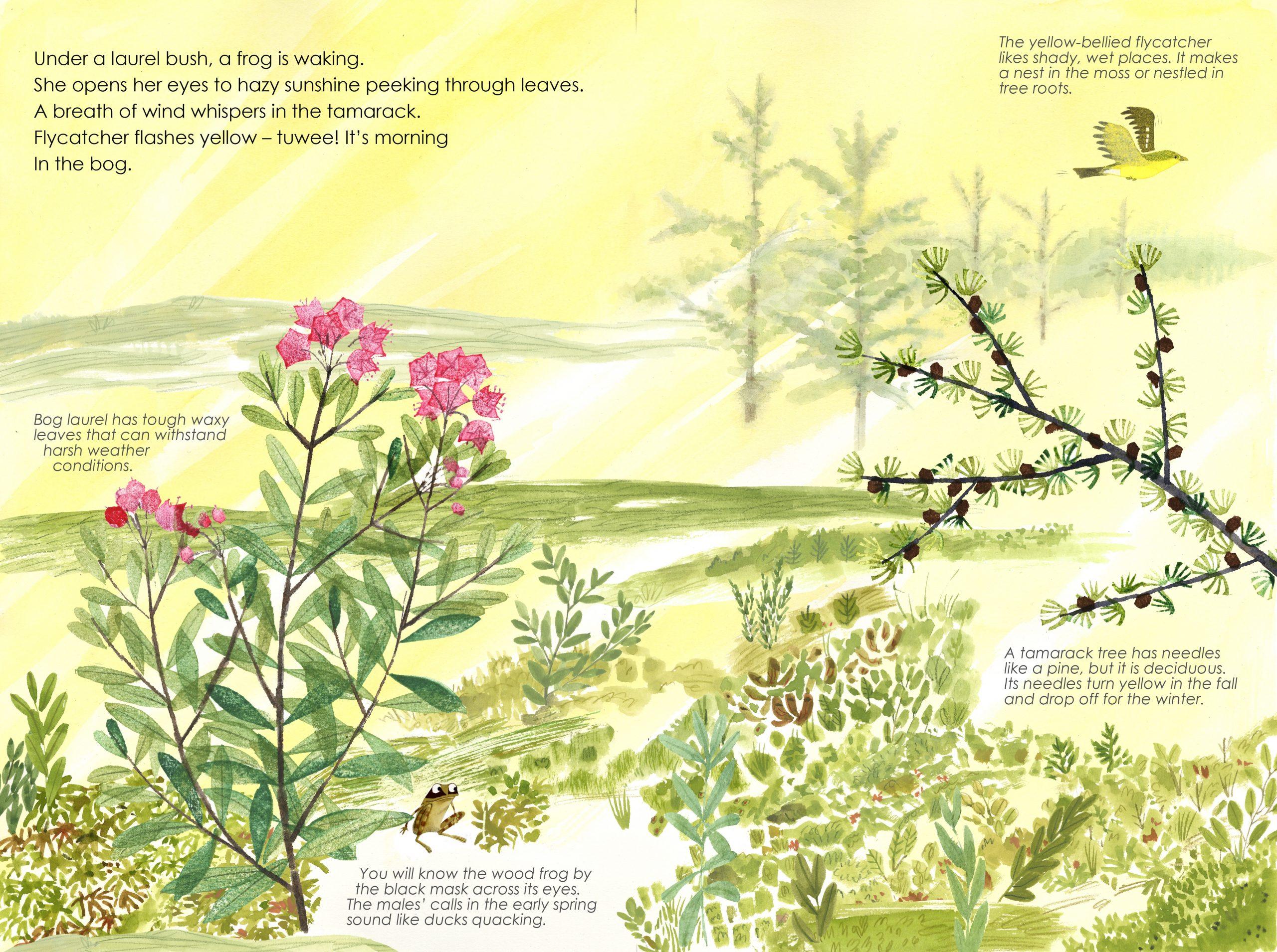 Illustration of bog landscape in the morning